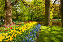 View At Beautiful Keukenhof Pa...