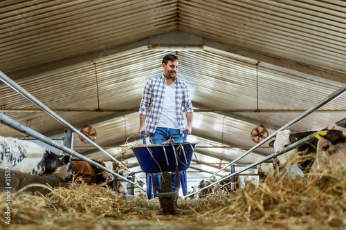 Fotografía Full length of handsome caucasian farmer in jeans and plaid shirt pushing wheelbarrow with hay and looking at calves