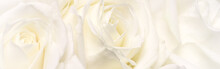 Soft Focus, Abstract Floral Ba...