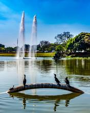 Ibirapuera Park - São Paulo -...