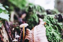 Champignon Et Ambiance D'automne En Forêt