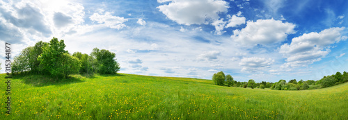 plakat Green field with white and yellow dandelions outdoors in nature in summer