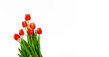 Bouquet Of Red Spring Tulips W...