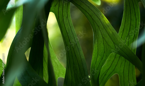 Fototapeta Close-up view of the leaves in the rainforest obraz