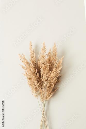 Fotografía Reeds foliage branches bouquet on neutral pastel beige background