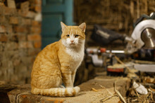 A Red Cat Sits And Basks On A Brick Oven. Pet Life In The Village
