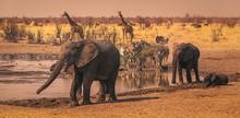 Elephants, Zebra, Giraffes And Ostrich By A Waterhole, Namibia