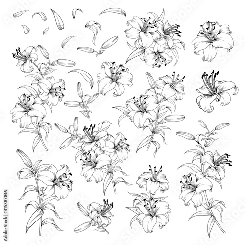 Carta da parati Linear style set of white lilies, hand drawn contour illustration of flowers isolated on a white background
