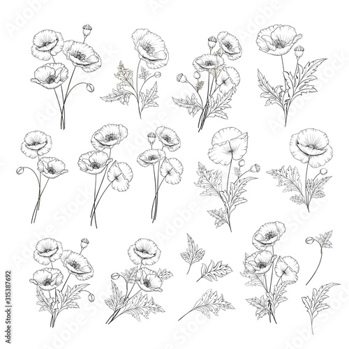 Linear style set of white poppy, hand drawn contour illustration of flowers isolated on a white background. White poppies collection. Vector illustration. - 315387692