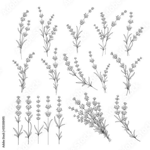 Set of lavender flowers elements Fototapete