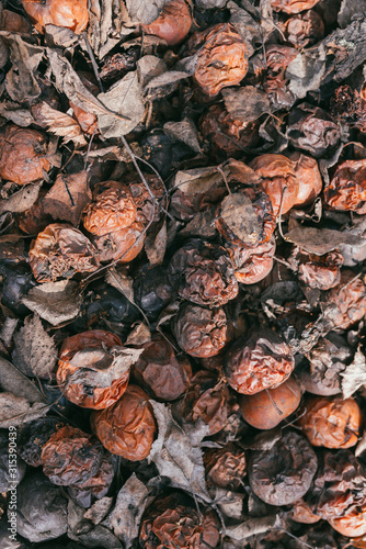 Valokuva Pile of rotten apples with dry leaves after winter