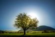 canvas print picture - Idyllische Landschaft mit Baum auf der Wiese bei Sonnenaufgang