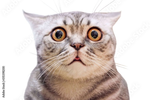 Young crazy surprised cat make big eyes closeup Slika na platnu