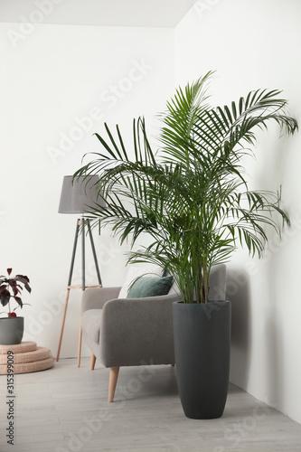 Obraz Beautiful potted palm in modern living room - fototapety do salonu