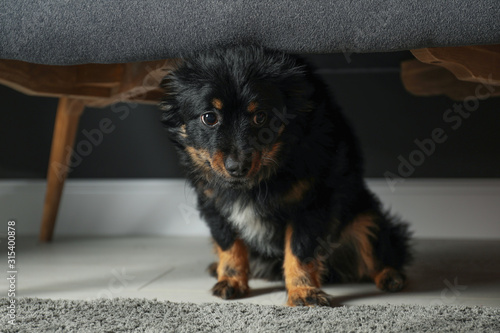 Photo Stressed dog hiding under sofa. Domestic violence against pets