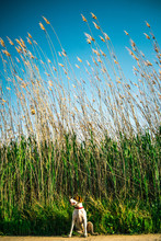 Happy Dog Looking Away And Sitting Near Tall Green Grass On Sunny Day In Nature