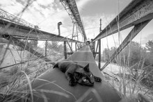 Black Cat Resting On Metal Beam Of Unfinished Building On Cloudy Day In Countryside