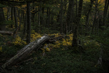 Tree Trunk Fallen In The Middle Of A Green Forest Covered In Green Grass In Torres Del Paine National Park
