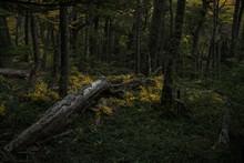 Tree Trunk Fallen In The Middl...