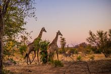 Kruger National Park, South Af...