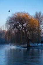 UK, England, London, Frozen Lake In Regents Park At Winter Dawn