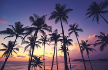 Coconut Palm Trees Silhouettes At Purple Sunset, Sri Lanka.