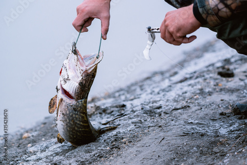 A spinning angler caught a pike, frees the bait from the mouth of the fish Canvas Print