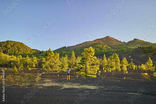Fotografie, Obraz Pinos entre arenas volcánicas donde se rodó The Witcher en Canarias