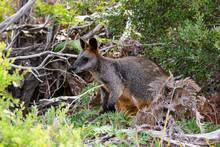 Grampians National Park Austra...