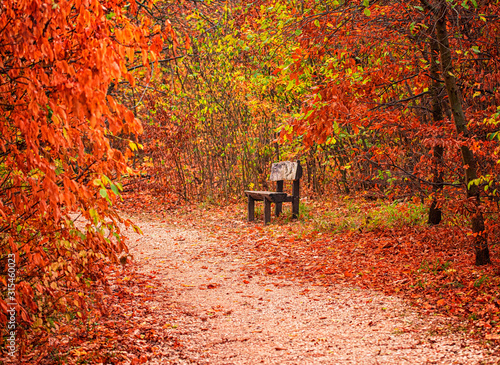 Bench with trees in autumn - 315460023