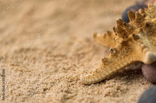 Obraz na plátně snails, rocks next to a starfish in sand and water