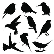 Bird Silhouettes. Vector Illus...