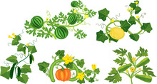 Set Of Different Gourd Plants (watermelon, Melon, Pumpkin, Zucchini And Cucumber) Isolated On White Background