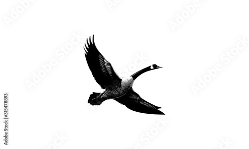 Goose Symbol Vector Royalty Logo Design Inspiration Fototapet