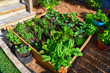 Fresh food from your own garden is part of a healthy lifestyle. Planted in spring, this raised backyard garden bed is loaded with a variety of herbs and vegetables ready to be harvested in summer.