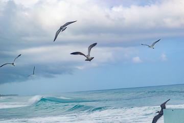 Fototapetabirds flying over the sea