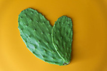Opuntia Cactus Nopal On Yellow Background