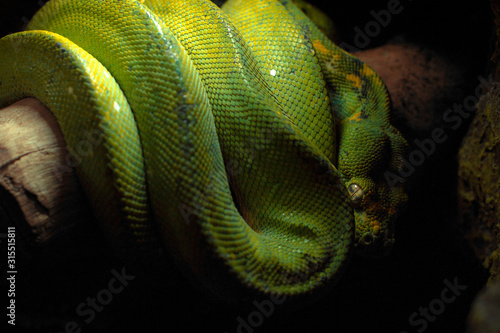 Serpiente verde Canvas Print