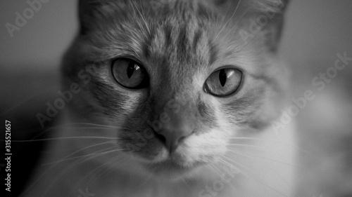 Fototapeta Ojos de gato