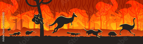Fototapety, obrazy: australian animals silhouettes running from forest fires in australia wildfire bushfire burning trees natural disaster concept intense orange flames horizontal vector illustration