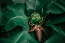 Tropical Banana Leaf Concept, ...