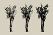 trees set silhouette. high contrast style : vector file (live trace in 3 degrees)