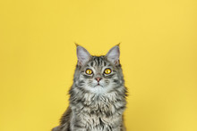 Portrait Of A Cat With A Camer...
