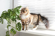 Leinwandbild Motiv Adorable cat and houseplant on window sill at home