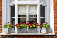 London City Downtown With Closeup Of Large Bay Window And Red Green Flower Decorations On Sunny Summer Day And Nobody Architecture In Pimlico