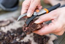 Closeup Of Hands Peeling Wood ...