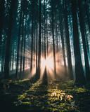 Sonnenaufgang im Bergwald