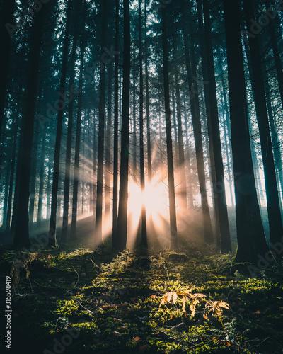Photo Sonnenaufgang im Bergwald