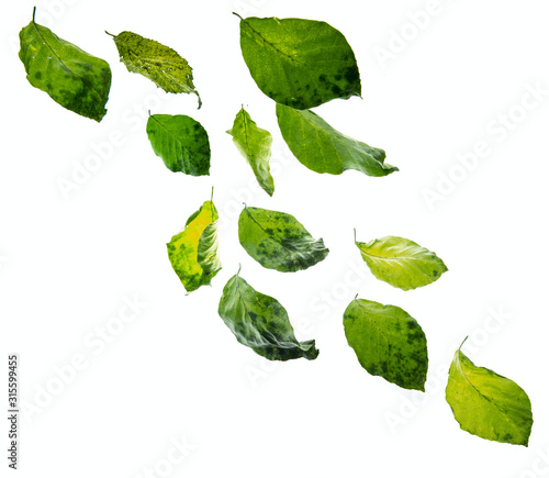 green leaves falling down Wall mural