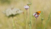 Butterflies That Feed On Wildlife And Flowers